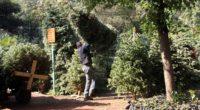 Ante el inicio de la temporada navideña, se dio arranque a la venta de árboles naturales en la Ciudad de México. El evento tuvo lugar en la Alcaldía Tlalpan, donde […]