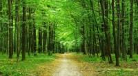 Los clientes de servicios administrados de impresión (Managed Print Services, MPS) de Xerox tendrán la oportunidad de contribuir a la reforestación de los bosques globales a través de la nueva […]
