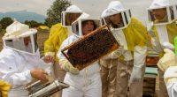 Fundación ADO dio a conocer que realizó una alianza con asociaciones e instituciones como Istaku Spinini AC, Dyctrosa, INDESOL e Irizar para brindar apoyo a los productores de miel Tiyatku, […]