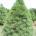 La producción del Árboles de Navidad es sustento para miles de familias campesinas del país. Valle de Bravo, Méx.- En el arranque de la Campaña Nacional de Cosecha y Comercialización […]