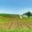 Biofertilizante: Mayor productividad agrícola Investigadores del Instituto Politécnico Nacional (IPN) elaboraron un biofertilizante con la bacteria Azospirillum brasilense, el cual logra incrementar hasta 30 por ciento la producción de gramíneas, […]