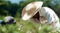 Especialistas en agroecología de Cuba visitarán diversos proyectos implementados en comunidades de Yucatán y Campeche a fin de diseñar un plan de trabajo para el fortalecimiento de proyectos de agricultura […]