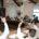 Ecatepec, Mex.- Como una medida para prevenir un nuevo enfrentamiento entre transportistas y locatarios de la Central de Abasto de Ecatepec, el cabildo solicitó al gobernador Enrique Peña Nieto aplicar […]