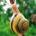 Caracol es el nombre común de los moluscos gasterópodos provistos de una concha espiral. Existen caracoles marinos (a veces denominados caracolas), dulceacuícolas y terrestres. Estos especímenes se mueven como los […]
