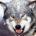 El lobo (Canis lupus) es un mamífero carnívoro. Es ancestro del perro doméstico (Canis lupus familiaris), como evidencia la secuencia del ADN y los estudios genéticos. Los lobos fueron antaño […]