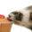 El hurón doméstico (Mustela putorius furo) es un mustélido, subespecie del turón, domesticado hace al menos 2.500 años. Otros mamíferos de la familia de los mustélidos tienen también la palabra […]