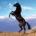 El caballo (nombre científico Equus caballus) es un mamífero perisodáctilo de la familia de los équidos, herbívoro, cuadrúpedo y de cuello largo y arqueado. A la hembra del caballo se […]