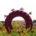 «Llanta ponchada por el paisaje» es solamente una obra de la exposición Lágrimas negras de la excelente artista mexicana Betsabeé Romero. Destaca por su uso de instalación y foto-documen-tación, así […]