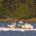 * Regresan las aves al parque Espejo de los Lirios en su vuelo migratorio anual con rumbo a Centroamérica. * Desde 2004, los pelícanos han hecho de Cuautitlán Izcalli su […]