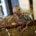 EXPOSICIONES.- El mundo invisible de René Magritte en el Museo del Palacio de Bellas Artes, ven y conoce a uno de los maaas destacados surrealistas Belgas, para que comprendan el […]
