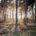 La Protectora de Bosques del Estado de México (Probosque) entregó paquetes de herramientas y autorizaciones de aprovechamientos forestales maderables a productores de Árboles de Navidad de San Francisco Zentlalpan, municipio […]
