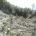 La Protectora de Bosques del Estado de México (Probosque) ha realizado 259 operativos en municipios de la entidad con vocación forestal y problemas de tala ilegal en lo que va […]