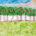 La Comisión Nacional Forestal (Conafor) abrió el periodo de recepción de propuestas para el Premio Nacional al Mérito Forestal 2010, en siete categorías, en las que reconoce la labor de […]