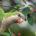 El saqueo comercial de aves y plantas es otra faceta de la extinción de especies en el territorio nacional. Por lo general, en las temperaturas que registran la Ciudad de […]
