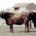 La Secretaría mexiquense de Desarrollo Agropecuario (Sedagro), a través del Programa Activos Productivos 2009, canalizó 42.8 millones de pesos a 660 productores de carne, recursos utilizados en mejoramiento genético, construcción […]
