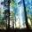 La Comisión Nacional Forestal (Conafor) dio a conocer que la ejecución de programas y políticas para mitigar los efectos negativos en el Medio Ambiente y convertir a las comunidades en […]