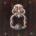 Solariega* Se insinúan en los pretiles virreinales los cantares de torcazas, y hay frescuras conventuales en las sombras de las casas. Casas de hosco Mayordomo, de pretérita cancela, de católica […]