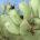 Otro ejemplo actual que amenaza a la biodiversidad mexicana es el de la palomilla del nopal, cuyo nombre científico es Cactoblastis cactorum. Esta especie de insecto, nativa de Argentina y […]