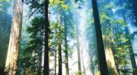 El Estado de México, por su superficie forestal, ocupa el 26º lugar, pero por su tradición en estas actividades y su producción maderable se ubica en el 7º lugar a […]