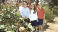 Los huertos escolares en Inglaterra han tenido buenos resultados entre los colegiales, según un informe de la británica Royal Horticultural Society, la cual dice que los niños desarrollan habilidades para […]