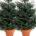 Próximamente se celebrará la Navidad y millones de árboles se talarán para esta conmemoración. Así se sigue dañando al Medio Ambiente, pero existen soluciones. Una de ellas es rentar un […]