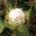 El algodón es una fibra vegetal, utilizada para elaborar ropa, permite realizar tejidos muy agradables y transpirables, pero es una planta con varios problemas. Es muy delicada, por lo que […]