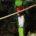 JCM de AgenciaRUJ El Quetzal, (Pharamachrus mocinno), nombre científico del Quetzal, cuyo significado es «garganta grande», es un ave considerada sagrada en la cosmovisión de las civilizaciones prehispánicas, que por […]