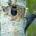 El carpintero imperial (Campephilus imperialis) era el pájaro carpintero más grande del mundo. Medía entre 51 y 56 centímetros de longitud y vivía en los bosques templados mexicanos. Originalmente se […]