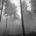 Por considerar a los ecosistemas arbóreos como esenciales para todo tipo de vida y para la Tierra, la Organización de las Naciones Unidas declaró a 2011 como Año Internacional de […]