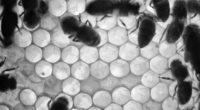 Por: José Manuel López CastroLuis E. Velasco Yépez  CAMPO Y DESARROLLO (54) o sé hasta qué punto se tenga un conocimiento cierto entre los apicultores nacionales sobre la […]