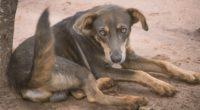 En el Día Mundial de la Rabia, World Animal Protection publica un nuevo informe 'Centrémonos en los perros', que proporciona un análisis de las acciones necesarias para eliminar la rabia […]