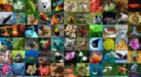 """El Partido Verde Ecologista de México (PVEM) nuevamente está atentando contra la vida silvestre al intentar prohibir el """"aprovechamiento extractivo"""" de la flora y fauna, por lo que la Asociación […]"""