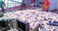 El gobierno mexicano sigue tomando decisiones para la gestión de la pesca sin información suficiente y actualizada. El ingreso de más de 300 mil familias de pescadores y el futuro […]