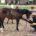 David Andrade detalló que el sistema de Doma Natural se enfoca que permite atender a caballos que por alguna razón padecen de problemas psicológicos y físicos, no por dolo de […]