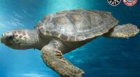 México- Grandes pendientes en el marco del Día Mundial de la Tortuga CDMX, Méx.- (INS). Las tortugas existen desde hace más de 200 millones de años. Eso los convierte en […]