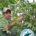 """Este año, 37 productoras y productores de café de la cooperativa """"Productores Orgánicos del Tacaná"""" obtuvieron la Certificación en Agricultura Sostenible Rainforest Alliance (RA), que beneficiará a 86 hectáreas de […]"""