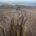 Desde el pasado 1 de mayo comenzó a fluir agua hacia el árido Delta del Río Colorado, del lado mexicano, esta situación se presenta como parte de un acuerdo binacional […]