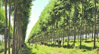 La asociación entre Natura, Empresa Brasileira de Pesquisa Agropecuária (Embrapa) y la cooperativa Camta (Cooperativa Agrícola Mista de Tomé-Açu), en la región norte de Brasil, dio como resultado un estudio […]