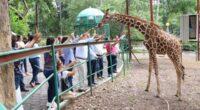 La Secretaría de Medio Ambiente y Recursos Naturales (SEMARNAT) firmó un convenio de colaboración con el Parque y Zoológico Metropolitano ECOPARC Colima para que éste adquiera la figura de Centro […]