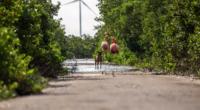 Se dio a conocer que Fundación Pedro y Elena Hernández A.C., la Secretaría de Desarrollo Sustentable de Yucatán, Secretaría de Servicios de Salud de Yucatán-Departamento de Zoonosis, la Reserva de […]