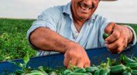 De acuerdo con datos de la Secretaría de Agricultura y Desarrollo Rural (Sader), cada mexicano consume 18 kilos de chile al año, lo que ubicó al país entre los primeros […]