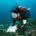 Los primeros hallazgos de la expedición de la organización internacional Oceana que realizó en los arrecifes de Bajos del Norte, ubicado a 250 kilómetros de la costa de Yucatán, arroja […]