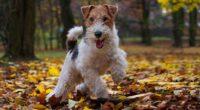 Tener una mascota es algo que al ser humano lo hace feliz. Ya sea por compañía o trabajo, los animales brindan esa paz y tranquilidad que sólo su presencia puede […]