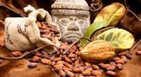 La Asociación Nacional de Fabricantes de Chocolates, Dulces y Similares, A.C. (ASCHOCO), celebrará por tercer año consecutivo, el Día Nacional del Cacao y el Chocolate el próximo 2 de septiembre, […]