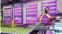 La empresa Signify dio a conocer el desarrollo de nuevos sistemas de iluminación LED de asimilación para potenciar cultivos de frutas, verduras y floricultura, con recetas de luz específicaspara cada […]