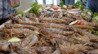 La tendencia de producción de especies pesqueras de los mares a nivel mundial y en México es a la estabilización de los volúmenes, por lo que las políticas públicas nacionales […]