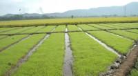 Como consecuencia de la disminución en la disponibilidad del agua en el país, la producción de alimentos puede ser afectada. Es posible que la superficie con buenas condiciones para el […]