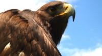 En el estado de Querétaro acaba de nacer el primer ejemplar de águila real mediante inseminación artificial, una técnica de reproducción asistida. Este es el primer ejemplar nacido en México […]