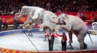 COLUMNISTA INVITADO: Sergio Roldán. Recientemente el tema de la restricción sobre animales en los circos de nuestro país ha causado gran escozor en la sociedad y derivado de esto se […]