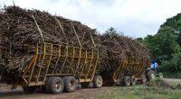 La Secretaría de Agricultura, Ganadería, Desarrollo Rural, Pesca y Alimentación (SAGARPA) impulsa un proyecto para la producción de bioetanol, el cual al ser combinado con combustibles tradicionales permite reducir 35 […]